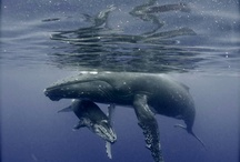 Whales and dolphins / by Courtney Patterson