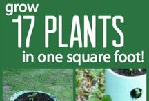 17 plants in square foot