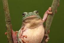 Frogs / by Brittny Stebbins