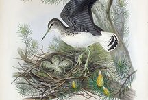 Birds-Illustrations