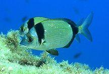 Chorwacja ryby