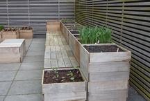 Grow a Garden / by Michelle Allmon Rogers