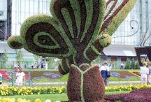 Topiary / Formára vágott bokrok