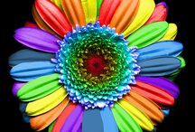 Color Your World / by Fawn Beeley