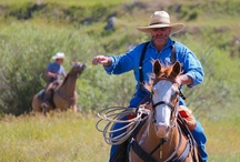 Cattle Drive / June-Early October- Mondays and Fridays. Enjoy a day on the range herding cattle the old fashioned way. For beginner to experienced riders. Our wranglers will drive guests and horses to the cattle ranch. There, guests will help move anywhere from 100-800 head of cattle.