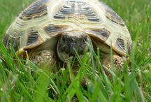 Reptile Articles
