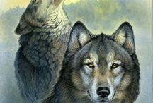 Farkas - wolf