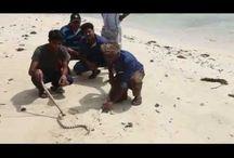 Andaman's Live Sea Snake