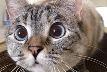 Nala,the cat.