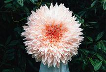 Simply Bloom
