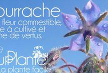 Variété Cup Plante. / Découvrez les variétés resistante et facile à cultivé.