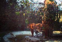 Bioparchi / I parchi nel mondo dove si possono incontrare da vicino gli animali e dove fanno attività di educazione e protezione della specie.