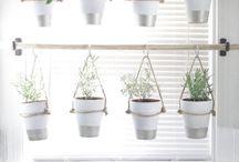 A nagy növény projekt