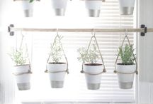 Herb garden in pantry
