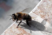 Saving a Bee
