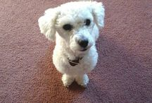Duque-kun / Él es mi mascota, lo amo con todo el corazón :3 tiene tres años pero aun asi pone caras totalmente adorables!