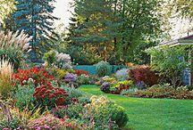 Gardening - colour
