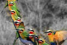 Birds HEAVEN