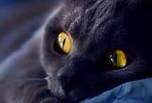 kats  eyes
