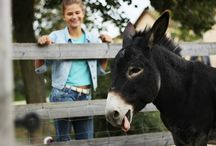 Donkeys, kids & more @ largest Open Air Museum in Austria