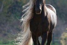 HORSES .... My Loves!!