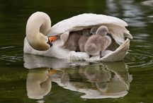 Moms and Children   / Families, sometimes with  a different combination. / by Mary Beth Elliott