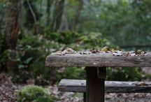 Otoño en Laforesta.... Autumn in Laforesta