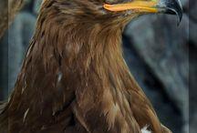 eagle board