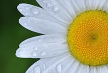Detailed floral photography