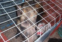 Wildlife Rescues and Releases