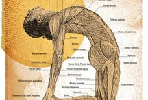 Yoga Anatomy / by Share Yoga