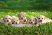 Pets / Puppies