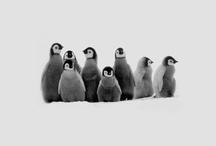 Animals / by LYNNsteven Boutique