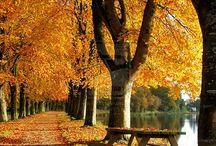 Mevsimlerin En Hüzünlüsü Baharların Sonuncusu 'Sonbahar'