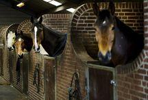 Mooie coole stallen / Paarden