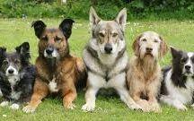 Dog Training / Dog training methods advice