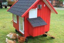 Rund um Hühner