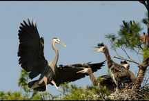 Birds / Films on birds of Eastern North America. Join Films Nature web TV on Youtube to see web series on wildlife.
