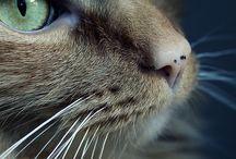 Beautiful Cat...美しい猫