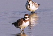 Birds and wildlife in the Algarve, Portugal / Photos of birds and other wildlife found in the Algarve, Portugal