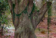 Ağaçlar / Vildan
