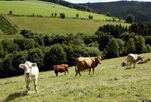 Wandern im Valmetal / Die schöne Landschaft im Sauerland, hier stellen wir unsere Wanderwege im Valmetal vor.