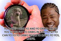 yo dawg