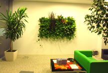 Green Walls @ Fun Room / Green Walls @ Fun Room