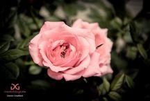 Flowers / Bloemen en planten