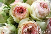 Wedding flower ideas / by Danielle Rainer