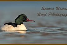 Bird - Burung