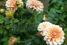 uploaded flowers