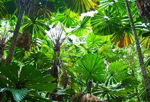 rainforest / things in the rainforest
