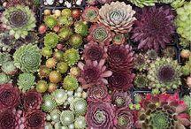 enjoy the colours / die wunderschöne Welt der Farben